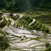フィリピン / バナウェ旅行記